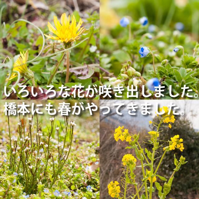いろいろな花が咲きました