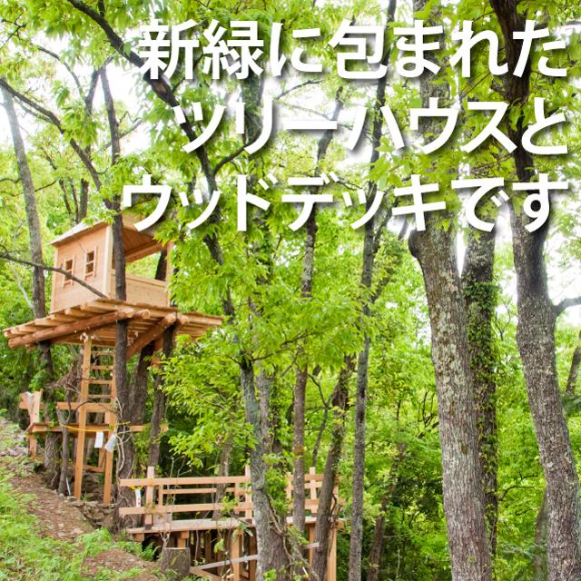 新緑のツリーハウス
