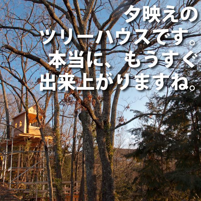 夕映えのツリーハウス