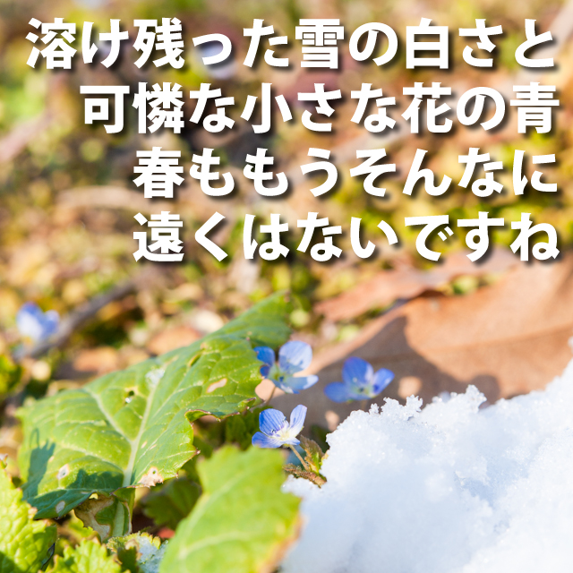 白い雪と青い花
